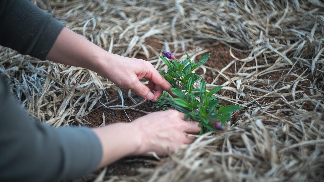 gardening-1645815_1280